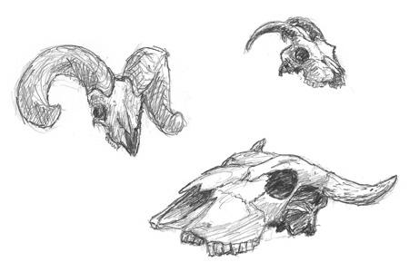 Skulls Sketch