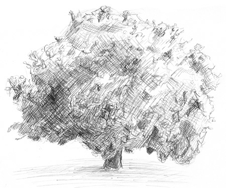 How To Sketch A Tree. Tree I#39;ve come to realize that