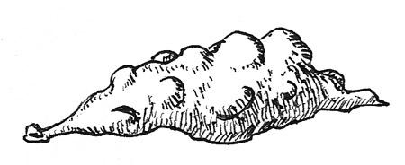 Lumpy Slug