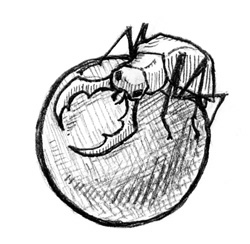 Beetle Ball