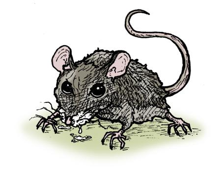 Rabid Deer Mouse