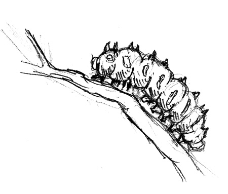 Caterpillar Sketch