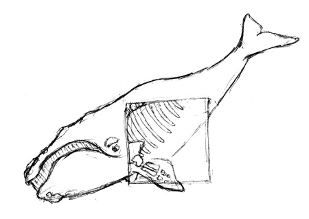 Right Whale Sketch