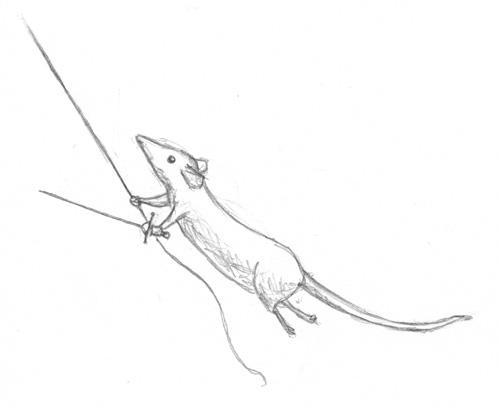 rat_hero