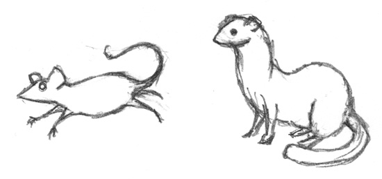 weasel_mouse_sketch